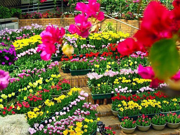 Chia sẽ những kinh nghiệm bán hoa ngày tết sao cho có lãi